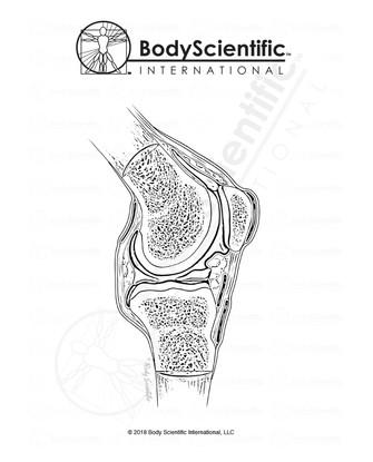 BSI_BW_Knee-Sagittal.jpg