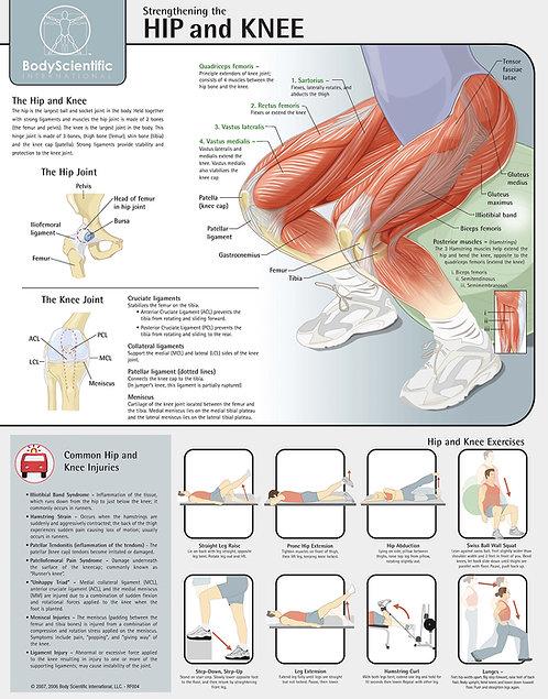 Hip & Knee - Anatomical Wall Chart