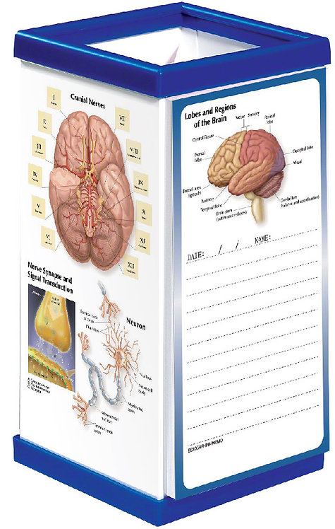 Anatomy of the Brain - Pen Box