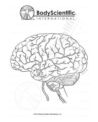 BSI_BW_Brain.jpg