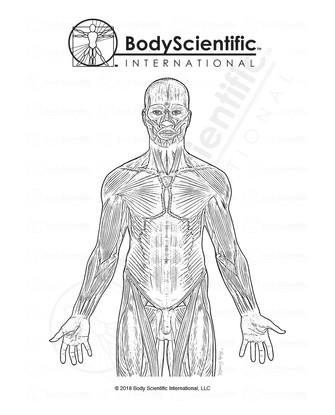 BSI_BW_Muscle.jpg