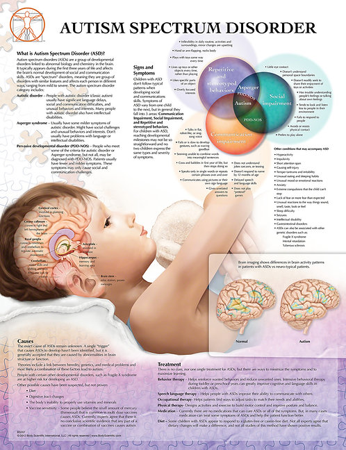 Autism - Anatomical Wall Chart