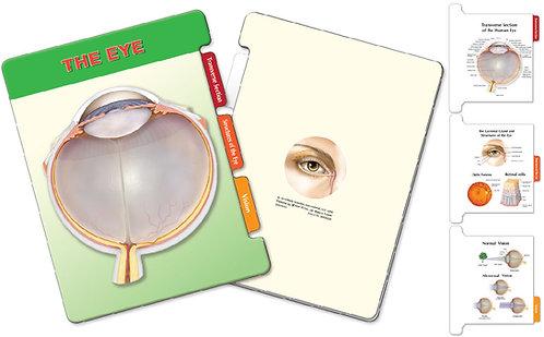 The Eye Anatomy - Slider Board