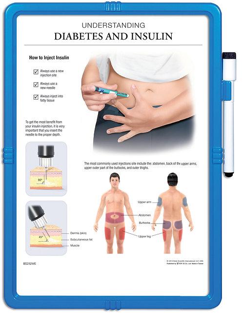 Understanding Diabetes & Insulin - Wipe-off Easel