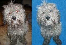 Original photo of Benji and painting
