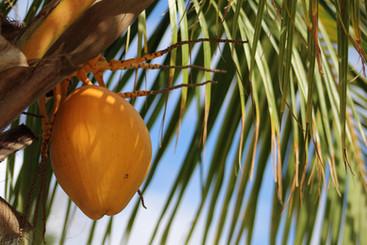 Fresh Fruit On A Tree