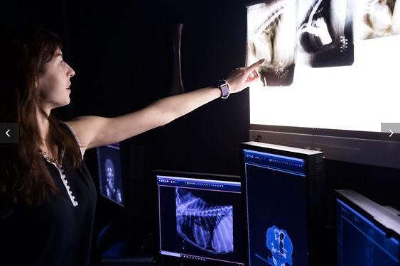 ACVR - viewing radiographs.JPG