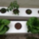 Hidroponia  Green Beat