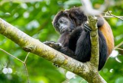 monkey5-1