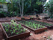 Agricultura biodinamica