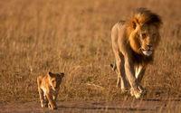 Coragem de Leão!