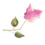 Tilted flower.png