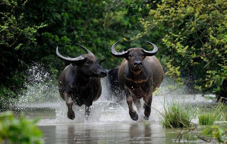 Wildlife Photography by Mayank Aggarwal