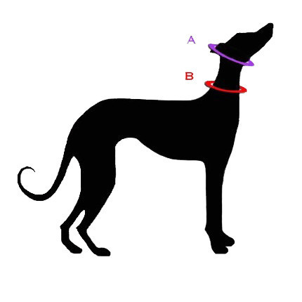 Measuring for a Slip Collar, Martingale or a Fixed Size Collar.