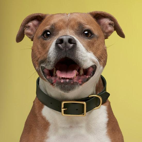 'Best Buddy' Collar