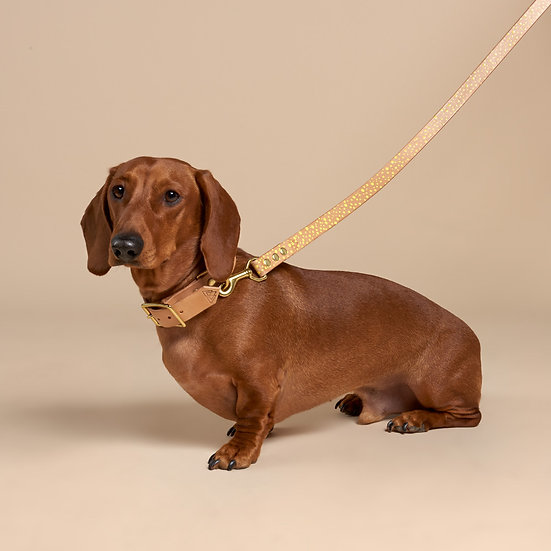 WHOLESALE: 'Freckle Face' Leather Leash