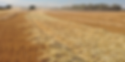 chaff rows.png