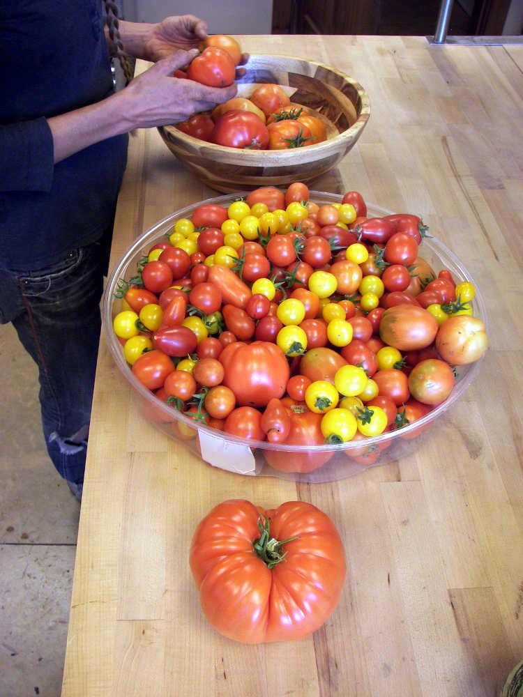 CLR-TomatoHarvest2K151005ForWeb