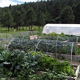 Vegetable garden in late summer.
