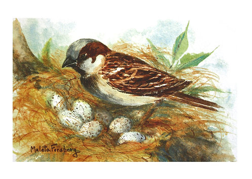 Nest Watcher