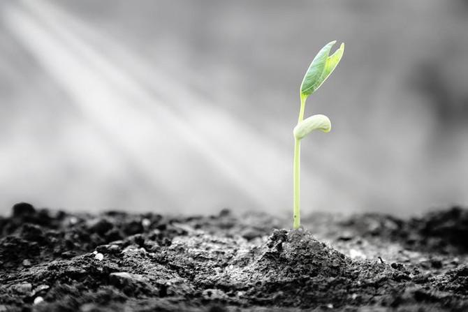 5 pontos fundamentais para desenvolver resiliência