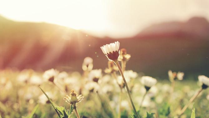 Primavera: A Difícil Jornada de ser Flor