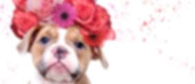 bloemenkranswebsite_bewerkt.jpg