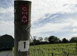 East Coast Wine News, June 15, 2020