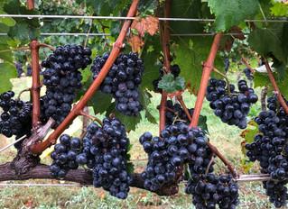 East Coast Wine News, November 4