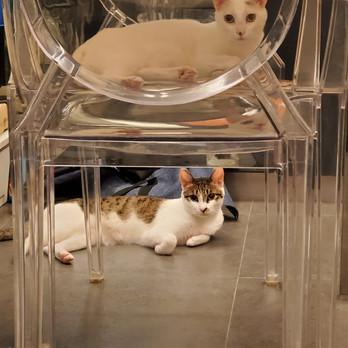 Clara Leung Cat 202.jpeg