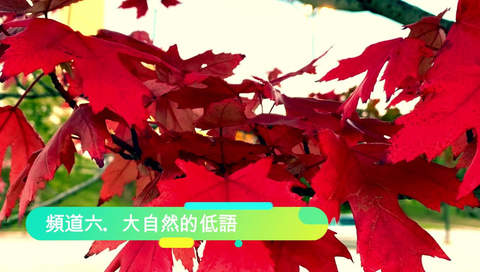 FRE3minutes 頻道六 大自然的低語 Channel 6 Nature's Whispers