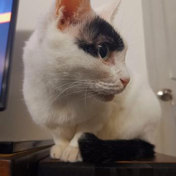 Ronnie Cat 201.jpeg