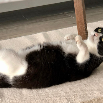 Bonnie Wong Cat 201.jpeg