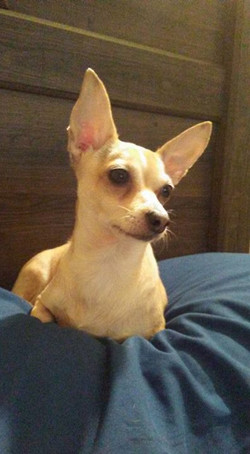 Well here she is....Baby our recovered stolen Chi