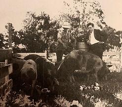 Willkie Farm.jpg