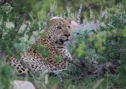 Tuskers Safari Camp, Klaserie Private Nature Reserve