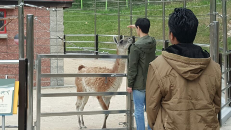 Cheolwoo with Mr. Guanaco