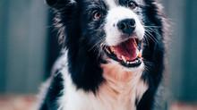L'ostéopathie en collaboration avec les toiletteurs canin/félins