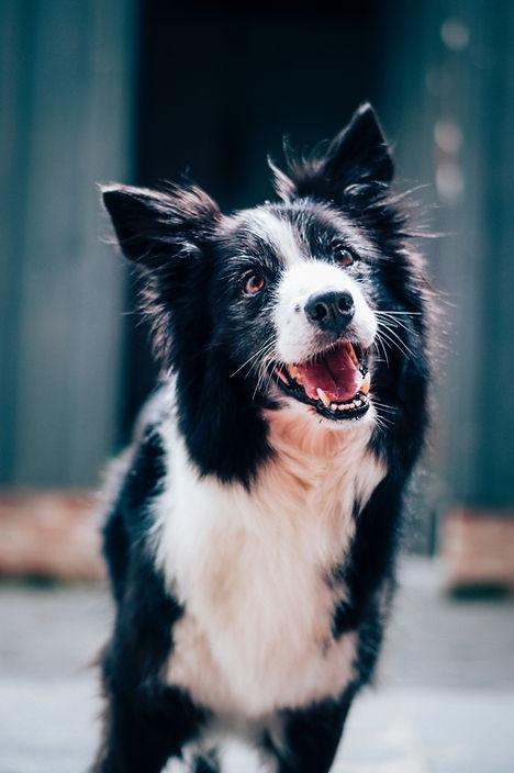Blije hond