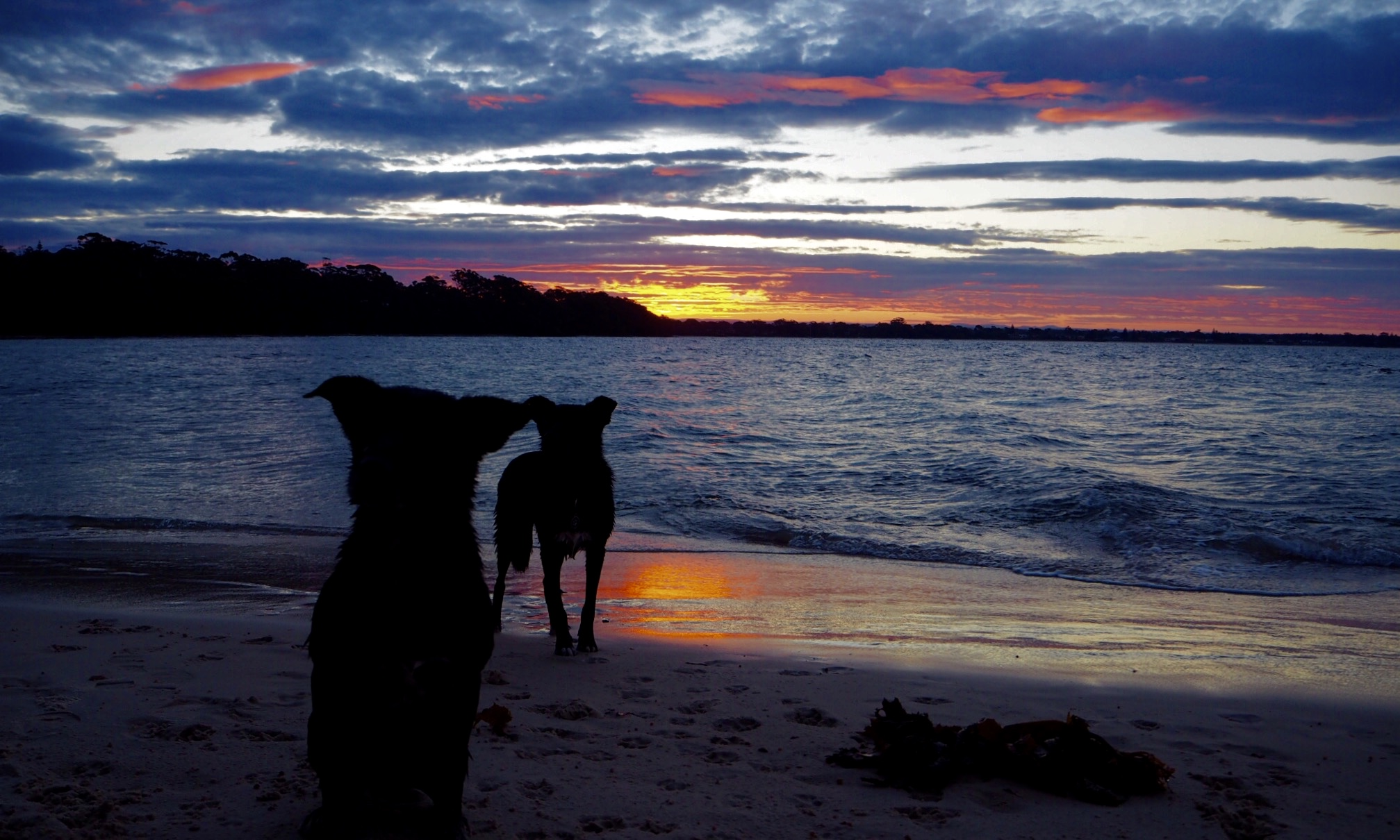 Canine Sunset on the Beach