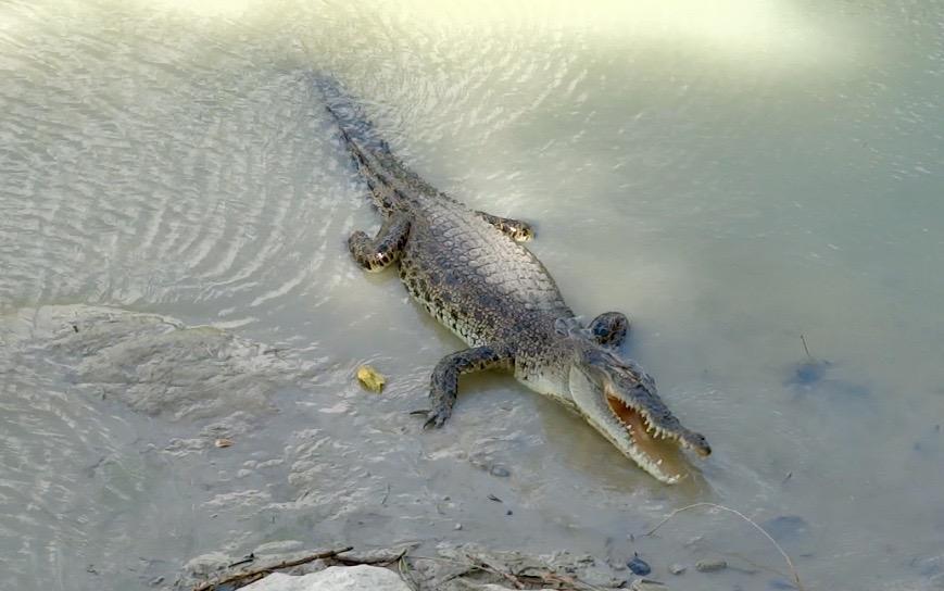 Croc in Arnhem Land
