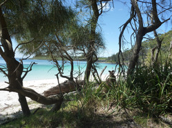 Murray's Beach in Jervis Bay