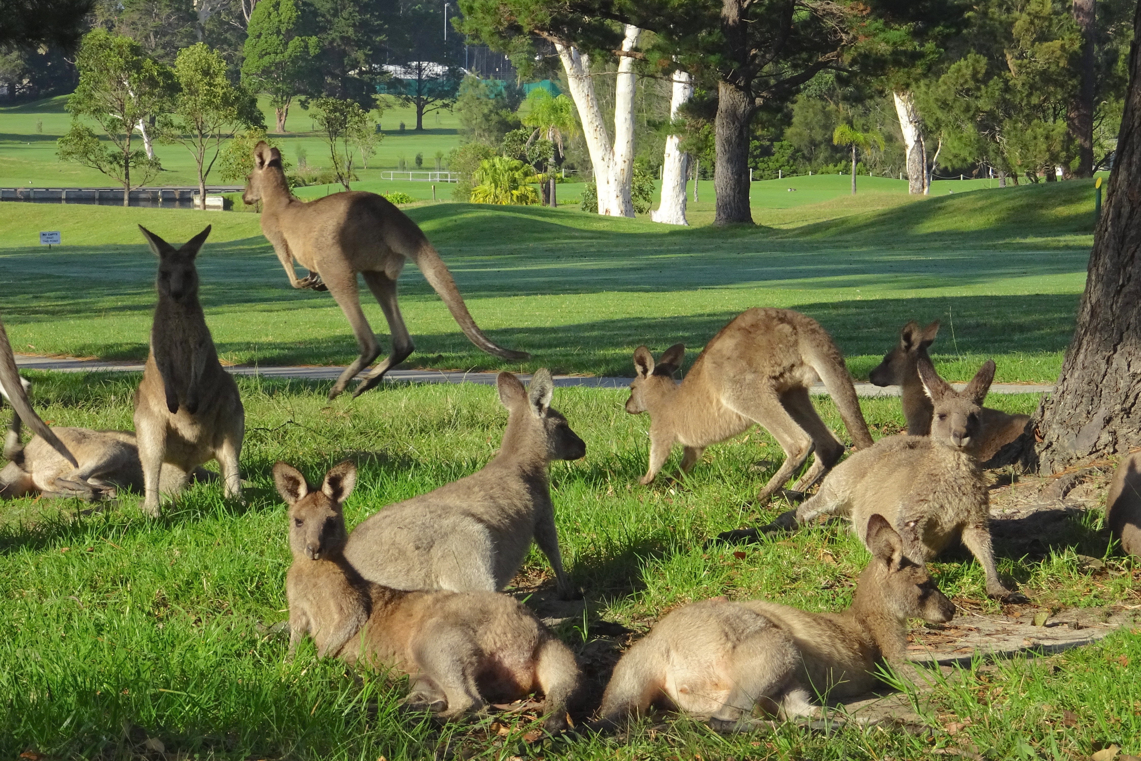 Golf with the locals