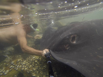 Giant Rays Down Under