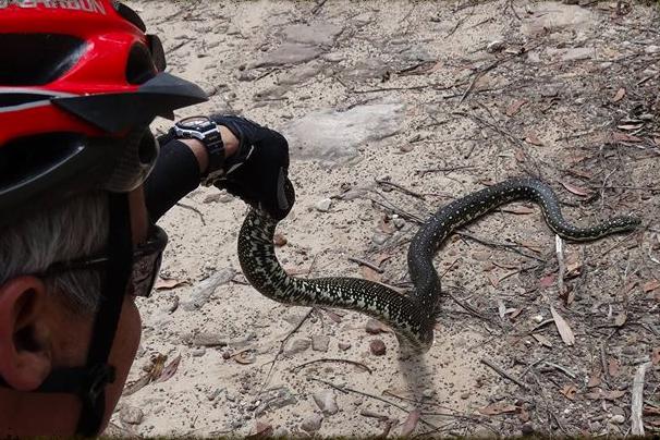 Diamond scale python