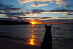 Canine Sunset