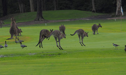 Hoppy Golf Day