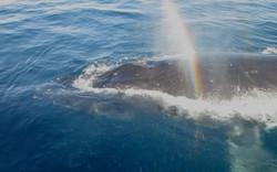 Whales rainbow