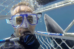 Great White Cage Diving