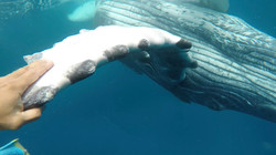 Greeting a Humpback